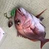 🐟鯛ラバ便🐟