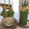 【韓国カフェ】大邱にある抹茶が美味しいサボテンカフェ「DAILY OASIS」
