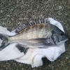 沼津 紀州釣り ひさしぶりに行ってきた