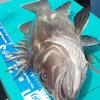 「ゆるゆる釣り部」を復活させるキャンペーン中