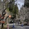 県立森林公園に春を訪ねて