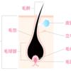 毛の基礎 ラプンツェルの髪型は医学的におかしいのです