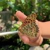 【伊丹市昆虫館】で1000匹を超える蝶に癒されてきました