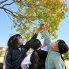 3年:図工「新緑の季節、木を感じて絵を描こう!」