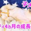 子犬マイティ4ヶ月 成長の記録 カニンヘンダックス