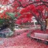盛岡にある日本一広い公民館!秋の庭園は紅葉の絨毯!