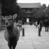 奈良公園といえば・・・