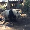 【上野動物園】癒しを求めて。大人だからこそのひとり動物園のすすめ。