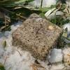 [三角点]★奥輪西山(四等三角点、点名:奥輪西)標石