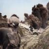 1945年6月7日 『日本軍の住民対策』