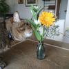 親もペットもお花も・・命を見つめて大切にすることを教えてくれます