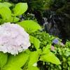 花と渓流の里 小滝【津山市八社】滝と紫陽花の共演に癒される。