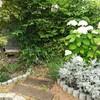 6月の庭に咲く花と苗の様子