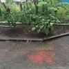 【家庭菜園】2日連続の暴風雨を乗り切ることが出来たのか?