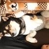 可愛いコタツ大好き犬。でも低温火傷には注意!