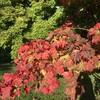 秋晴れな日々。