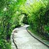 ラベンダー節IN上海紫海鹭縁浪漫庄園-薰衣草は咲いている?