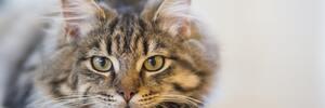 猫好きだけど猫を飼ってない私が勧める圧倒的に癒される猫好きTwitterアカウント3選