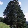 巨木と兜明神岳