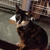 【猫の日】これまで撮った猫写真まとめ【滑り込め!】