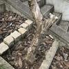 ちょっことした伐採作業-兵庫県川辺郡猪名川町