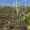 Bopparder Hamm ワインハイキング