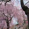 桜の木の下には就活生が埋まっている