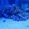 【写真付き展示生物リスト】オービィ横浜 インフィニットアクアリウム