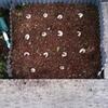 カブトムシの幼虫がまたまた大きくなりました!キャパオーバーによる対処がヤバイ!
