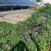 【太陽光フェンス】フェンスは高額だから土地の外周ではなくて出来るだけ設備の周りにだけ設置が安く済むと気付いた