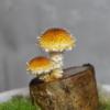 キノコが生える小さな切り株『ヌメリスギタケのミニ原木栽培』