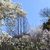 浄瑠璃寺/陽春 春の花咲きほこりたる浄土かな