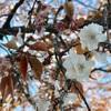 【お花見】代々木公園のお花見は危険だ!不安になる忘れ物