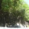 遅すぎる…!>((( ;゚Д゚))) 5月に福知山線廃線跡に行ってきました。②