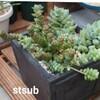 【多肉植物】我が家の寄せ植えは地味かもしれません