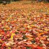 紅葉は落ち葉を教えてくれる