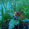 【鎌倉トレラン】スズメバチの季節になってきました(2016年6月3週目)