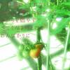 トマトとイモちゃんの夏が来た
