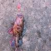よっちゃんイカで釣りは可能なのか?!実際に穴釣りの仕掛けで検証してみた!