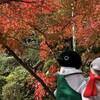 """これぞ穴場!""""紅葉寺""""の紅葉は世界一!京都紅葉の旅その2(110)"""