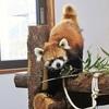 【長野】茶臼山動物園でレッサーパンダ・ウォンバット・可愛い子ザルも!アクセス/駐車場等