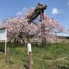 4月17日(金)桜大好き人間にとっては手招きする桜に釣られてしまう、熟語消しハマったね、面白い、雨合羽台湾から