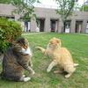 5月後半の #ねこ #cat #猫 その4