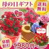 母の日ギフト通販2018おすすめは FlowerKitchenJIYUGAOKA選べる20種類カーネーション5号鉢楽天