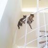 注文住宅WEB内覧会 螺旋階段。専門家による手仕事。ディティール達。