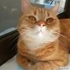優雅に日向ぼっこして余裕を見せつける猫