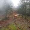 森林保護区の枯れ木(ダグラスファー)処理