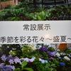チューリップ四季彩館、季節の花々~盛夏その2・・