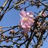 桜を見にジョグ🌸