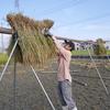 稲刈りとはざがけの練習